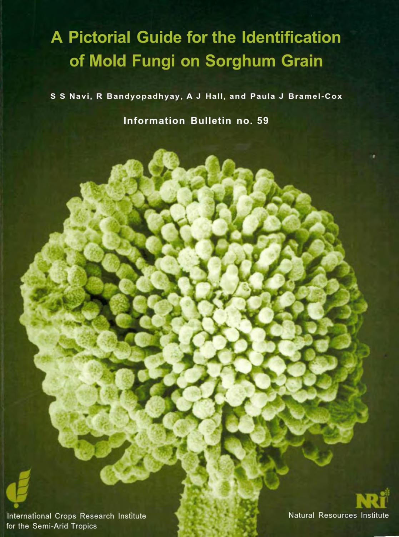 helminthosporium zeicola pinworms emberekben