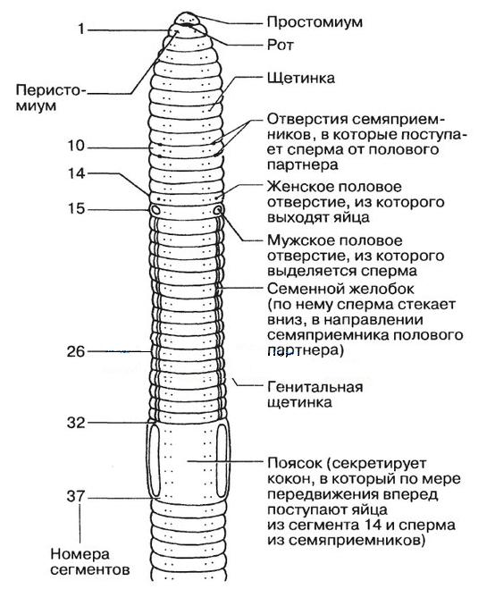 az emberi testben élő parazitatabletták áttekintése giardia antigen idexx