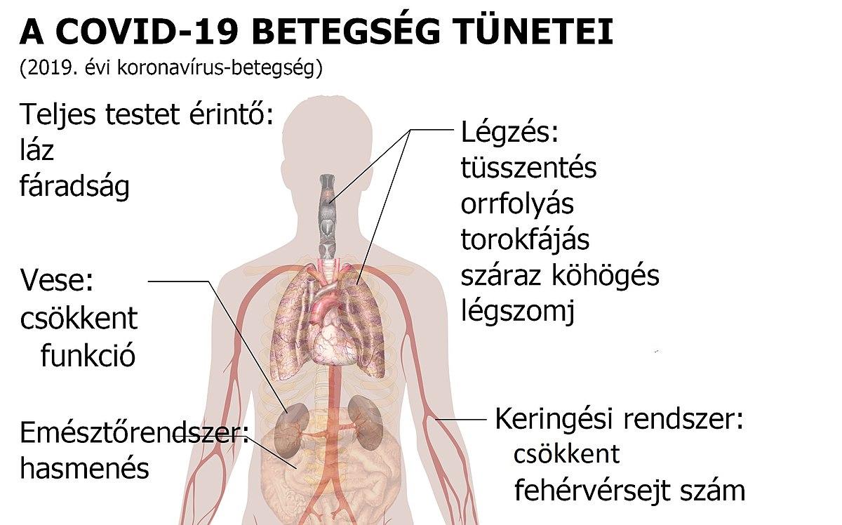 mustang parazita kezelés a férgek embereken történő tünetek megelőzése