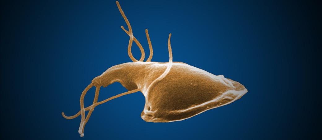 helminth szakember az emberi parazita fertőzés és kezelés jelei