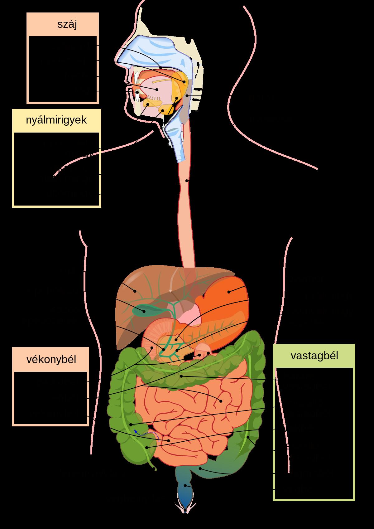 paraziták kezelése a gyomorban és a belekben