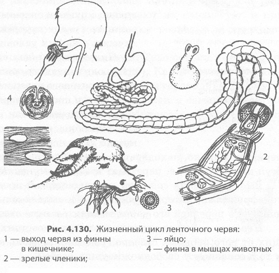 dipyllobothriasis opisthorchiasis
