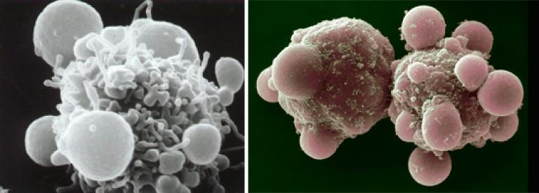 életképes helminták gyógyító parazita kezelés
