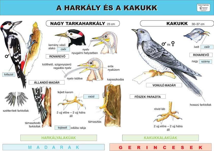 parazita oktatás széles lentec gyógyszeres kezelés