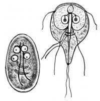 Unidox giardiasis