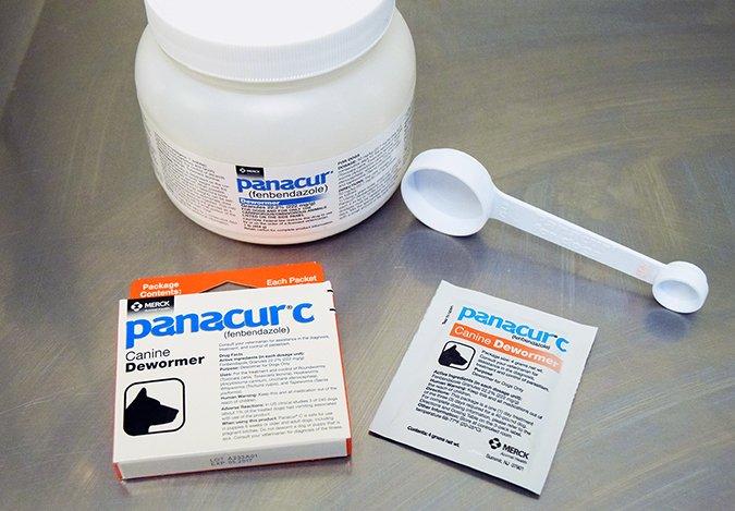 törpe szalagféreg közbenső gazda paraziták és kezelő tablettáik