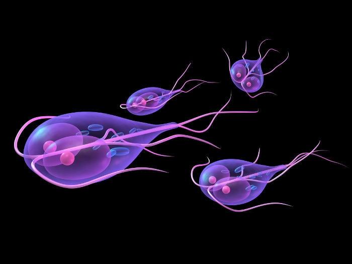 esame giardia uomo paraziták az emberi székletben