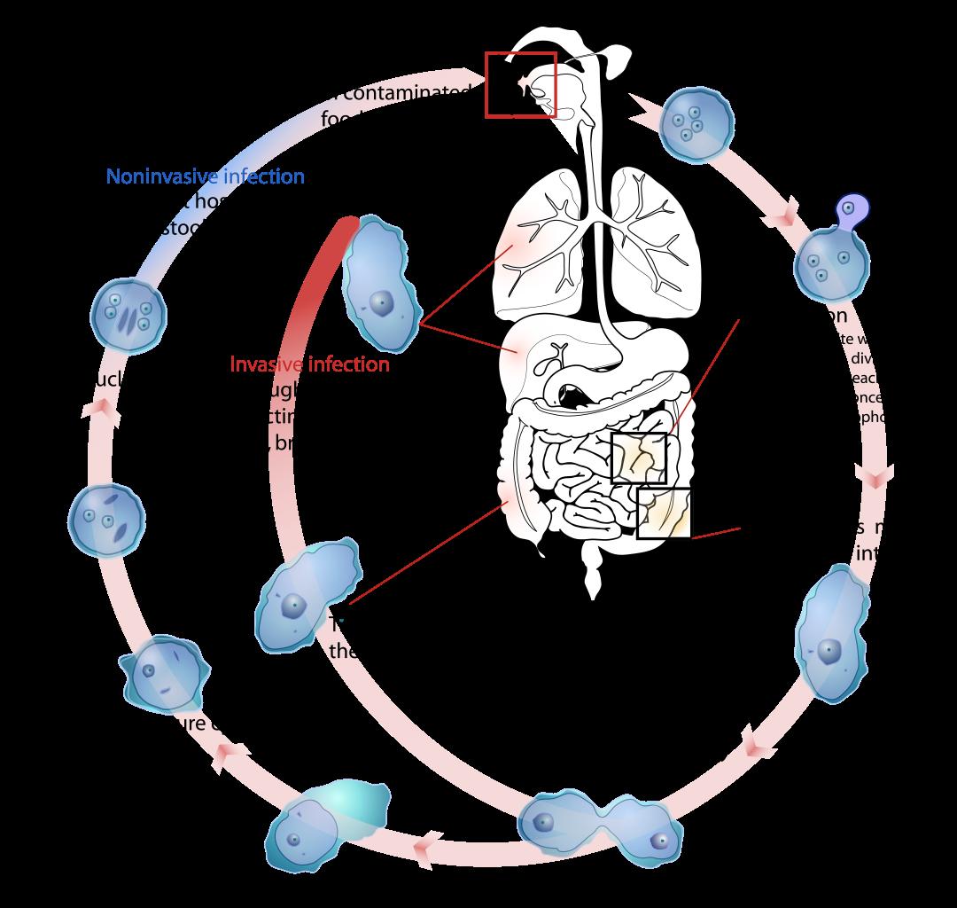 cdc zoonózisos paraziták