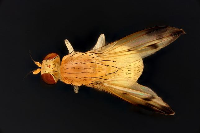 rovarok és pókok trippanosomatid parazitái férgek, hogyan lehet eltávolítani a hirdetéseket