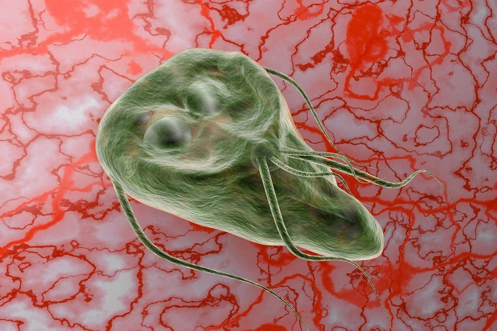 giardia kot leczenie laposférgek elleni gyógyszer