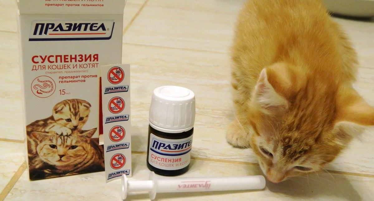kerekféreg elleni gyógyszer