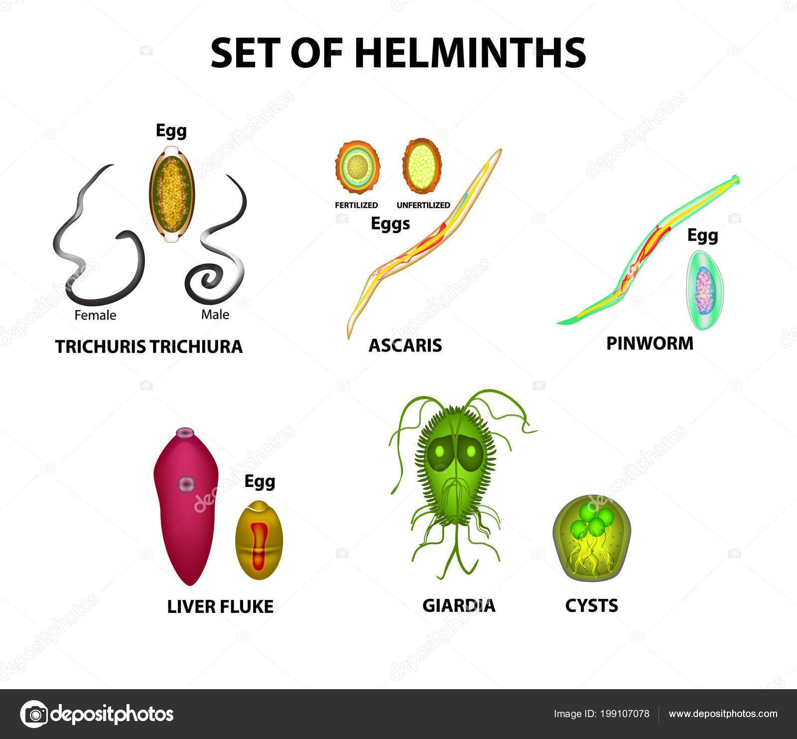 anthelmintikum fonálférgek kezelésére milyen helminták vannak a hólyagban