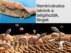 A Magyarországon előforduló féregfertőzések