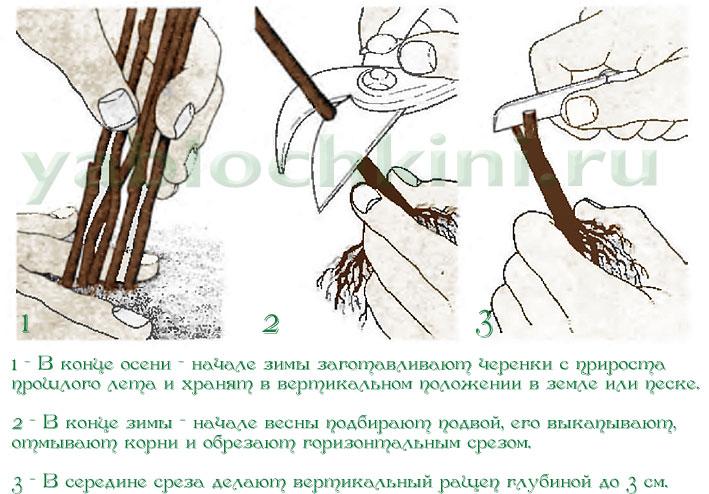 pinworms időszak)
