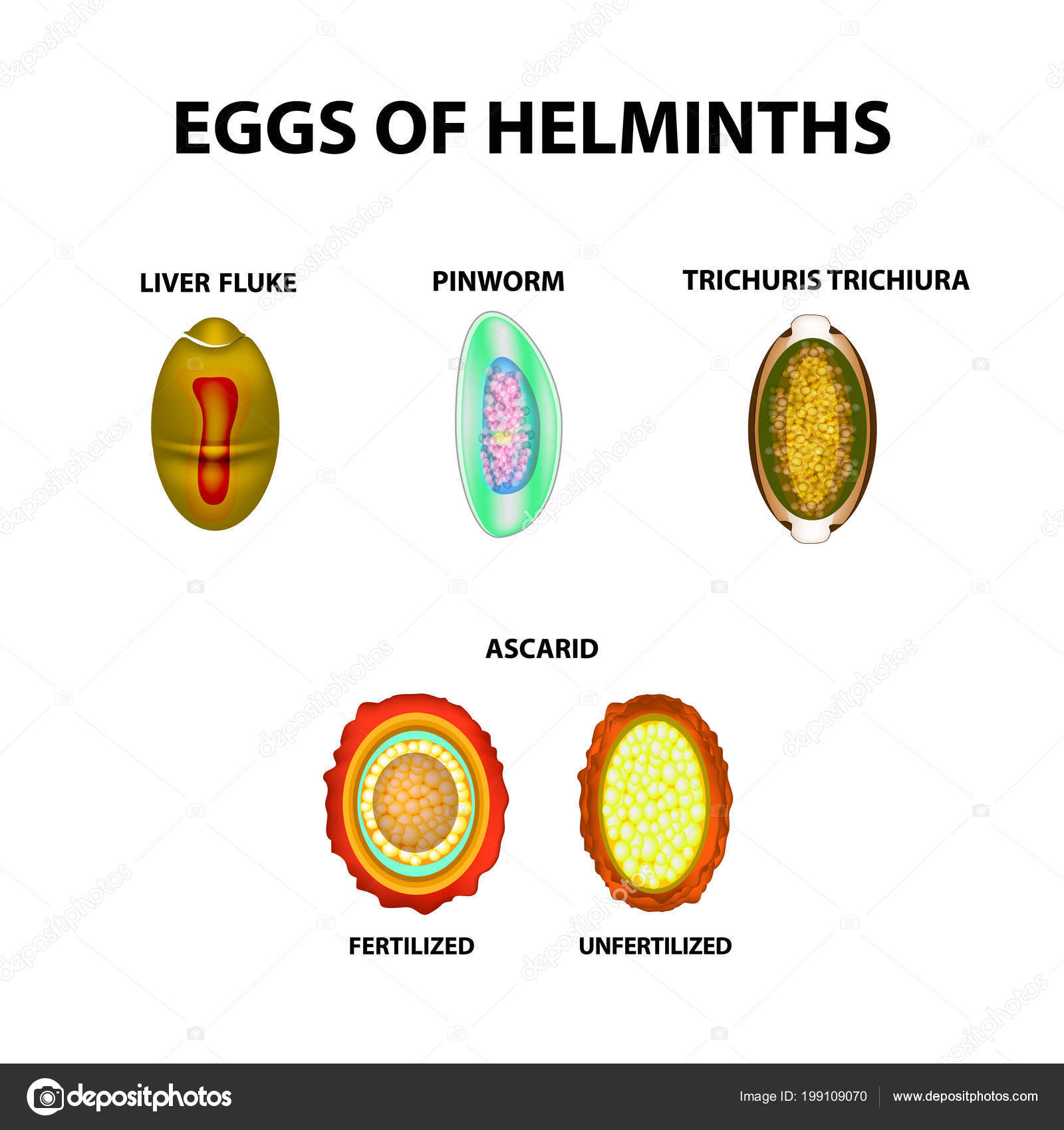 helminth tojások fajai