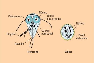 modern paraziták gyógyszerei az emberi test listáján