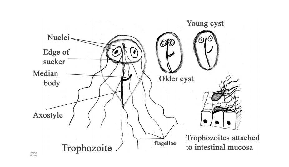 az asztma parazita kezelése