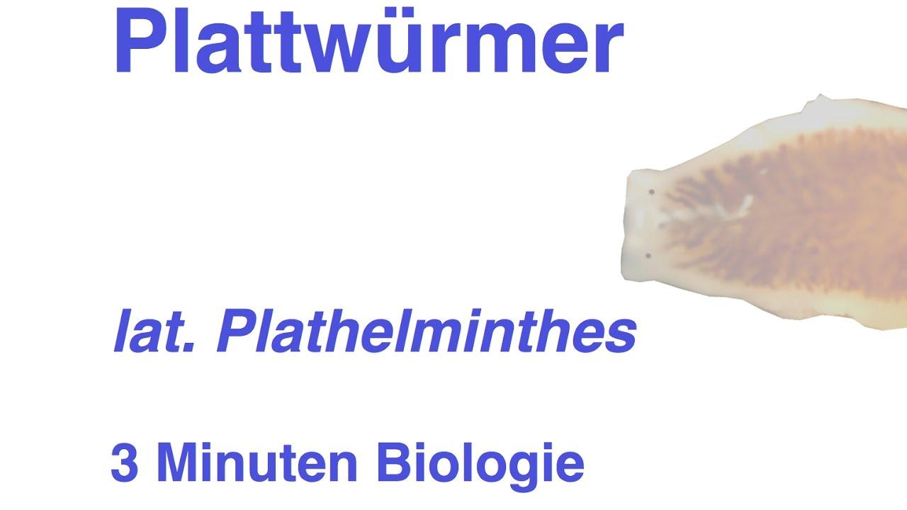 plathelminthen fortpflanzung helminták gyomor bélrendszer
