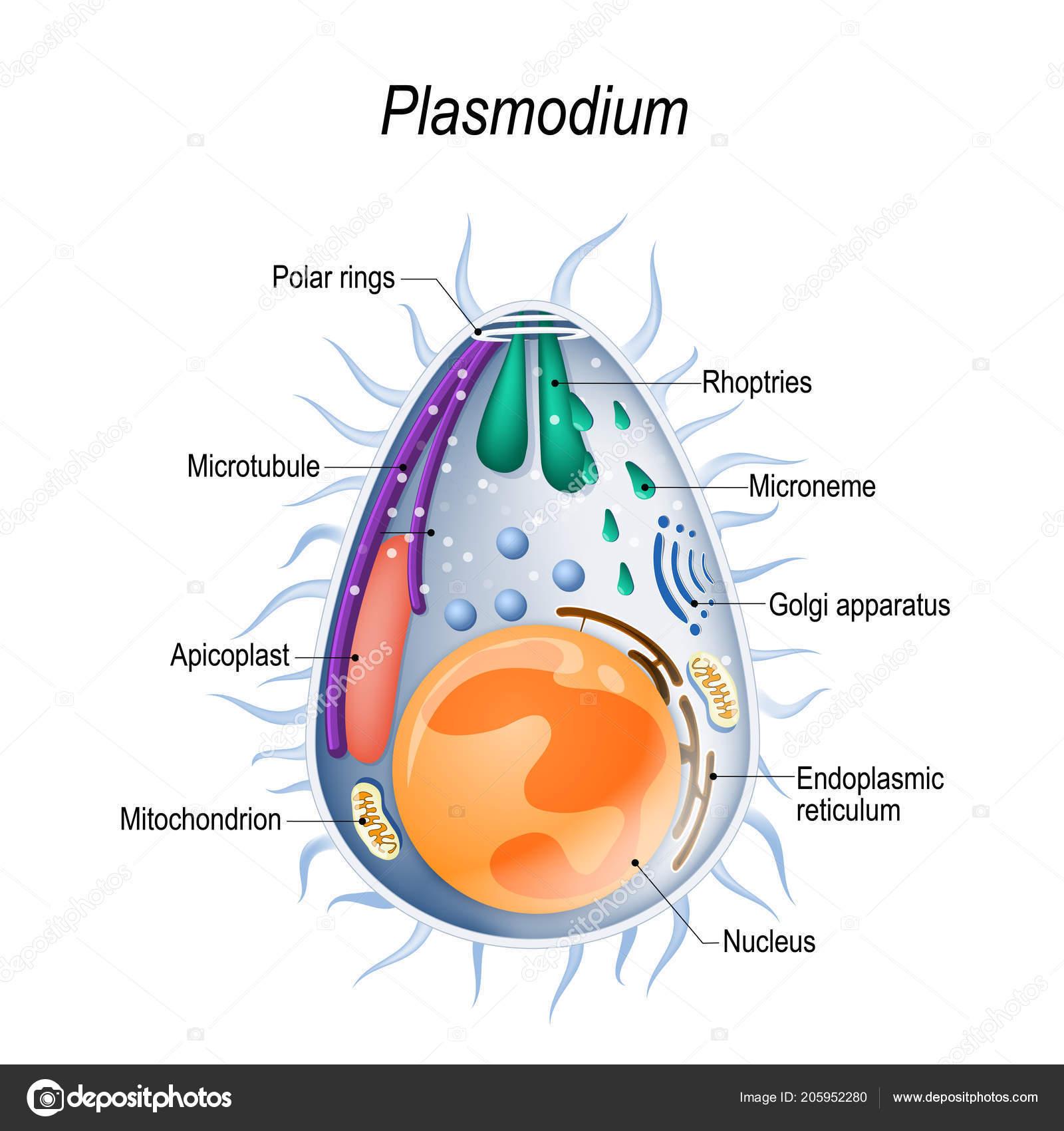 komplex készítmények férgekhez A pinworms gyakran megjelenik