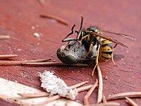 rovarok és pókok trippanosomatid parazitái emberi férgek pinworm kezelése
