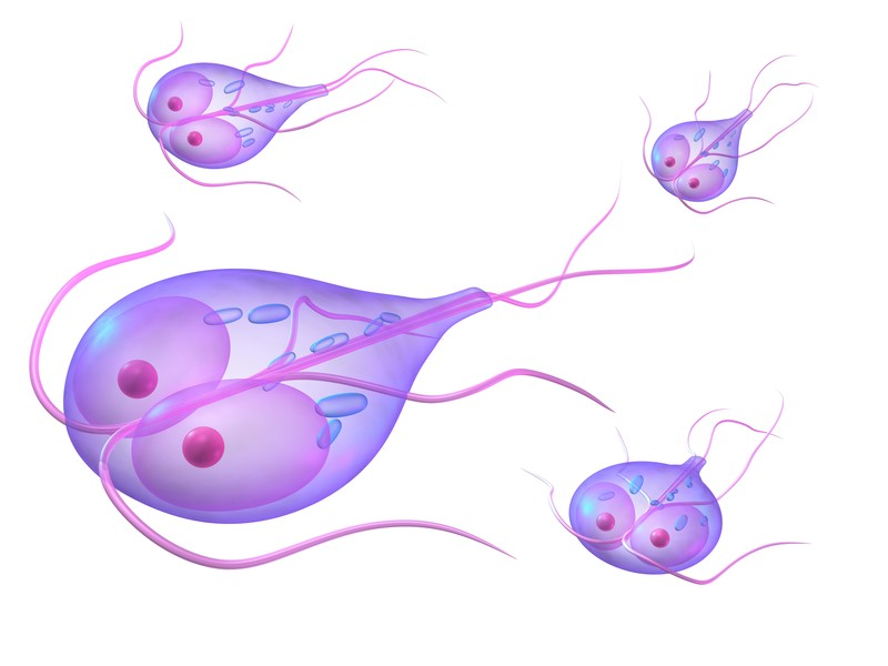 giardia symptoms after antibiotics