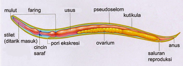 Gyűrűsférgek – Wikipédia