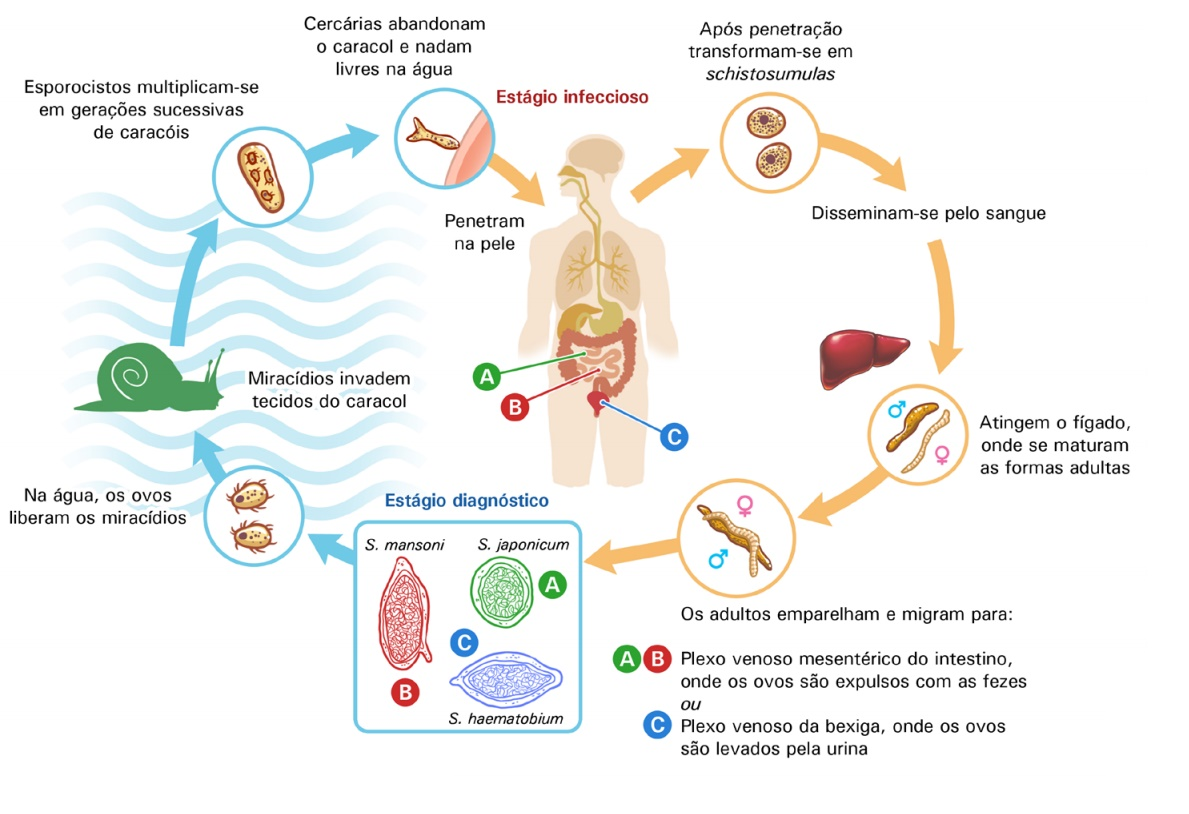 A giardiasis férgek belfergesseg kezelese terhesseg alatt