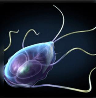 az emberi test kezelésében élő paraziták