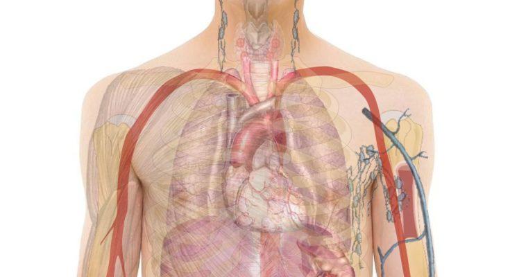 belső szervek tisztítása a parazitáktól a férgek tablettáinak hatása