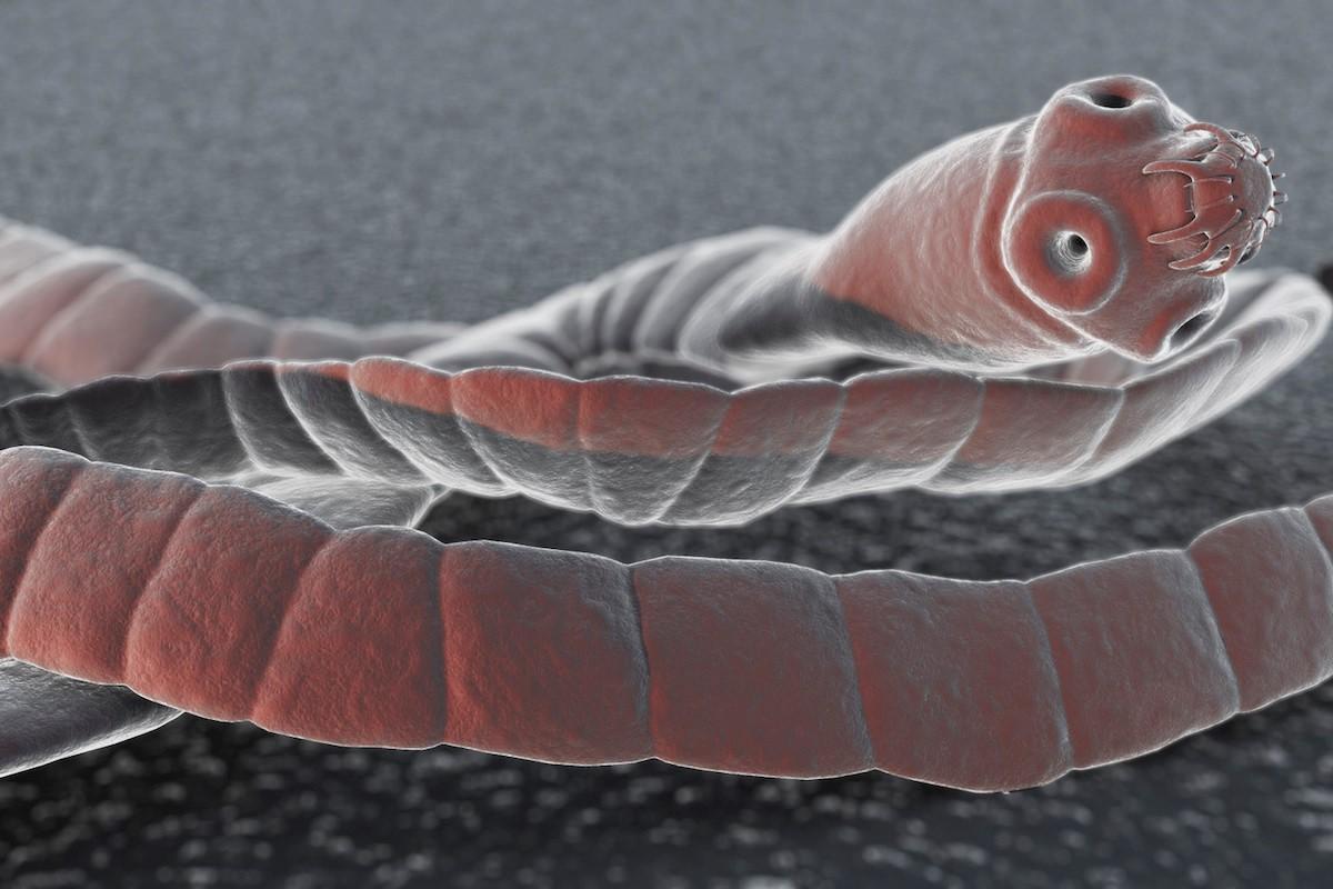 a parazitak kivalasztasa a testbol a férgek kezelése felnőtteknél jobb