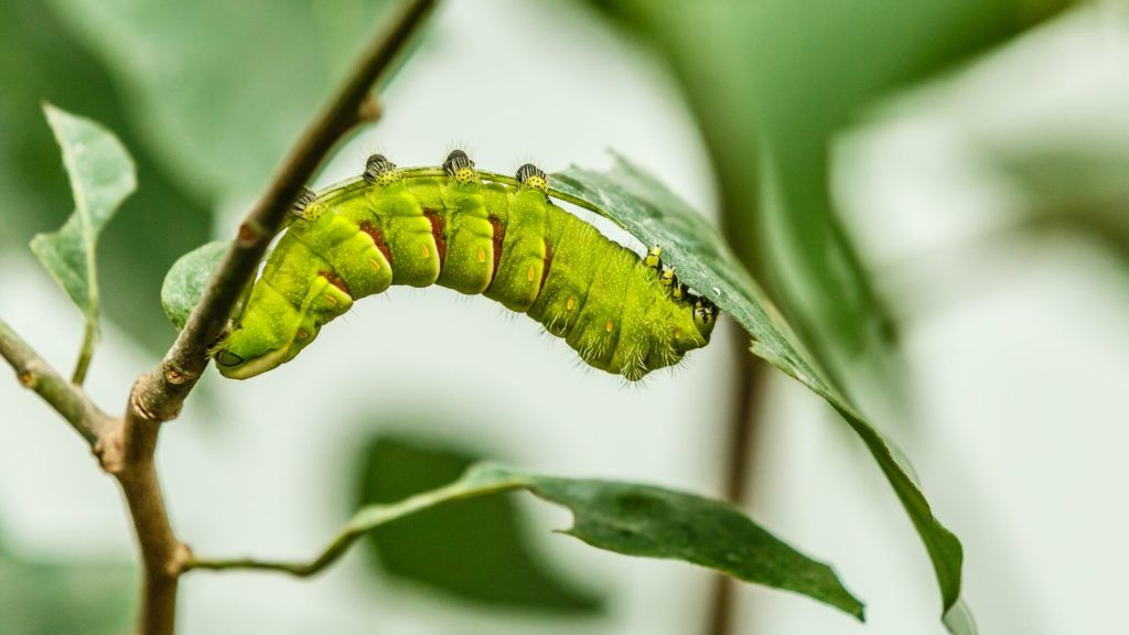 Parazita elhalasztották, Parazita életút