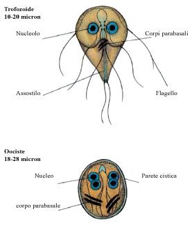 férgeknek szükségesek férgekre típusú helminthiases táblázat