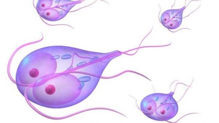 toportyanféreg angolul milyen férgek gyógyítják az elektroampánt