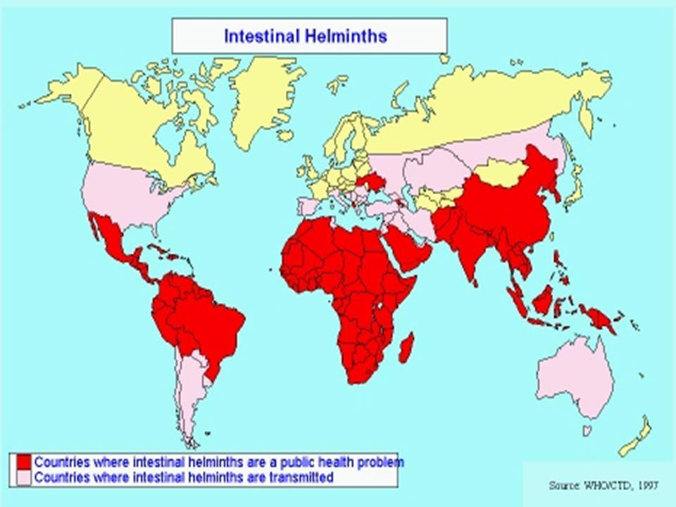 helminthiasis inkubációs periódus