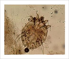 kén paraziták kezelése féreg informatika