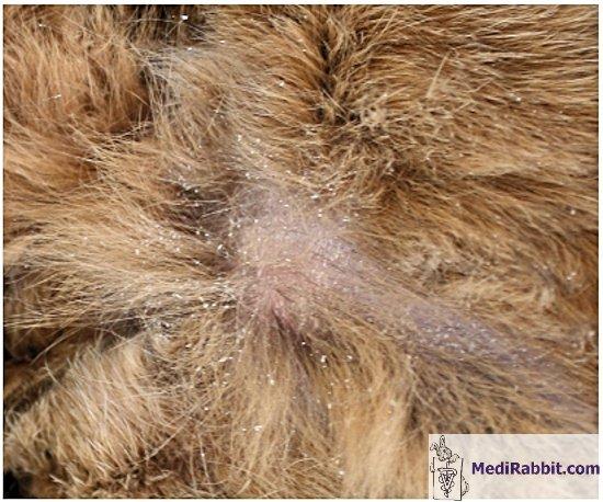 bőr paraziták uk segít az aktív szén a férgeknél