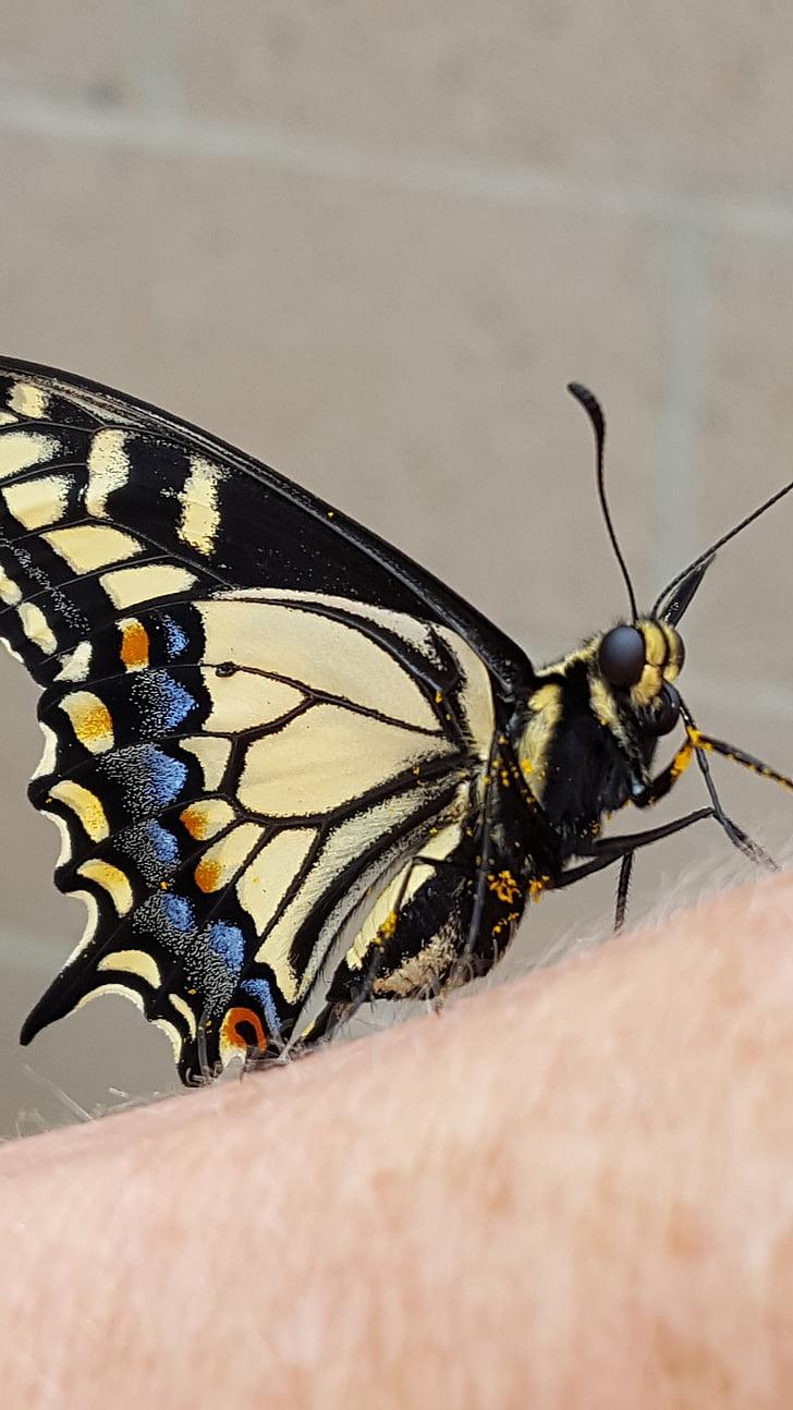 Ady Endre: Megöltem egy pillangót