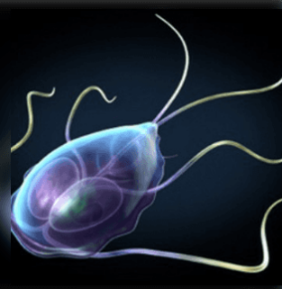Hogyan kezelik a paraziták kezelési rendjét? hogy a férgek