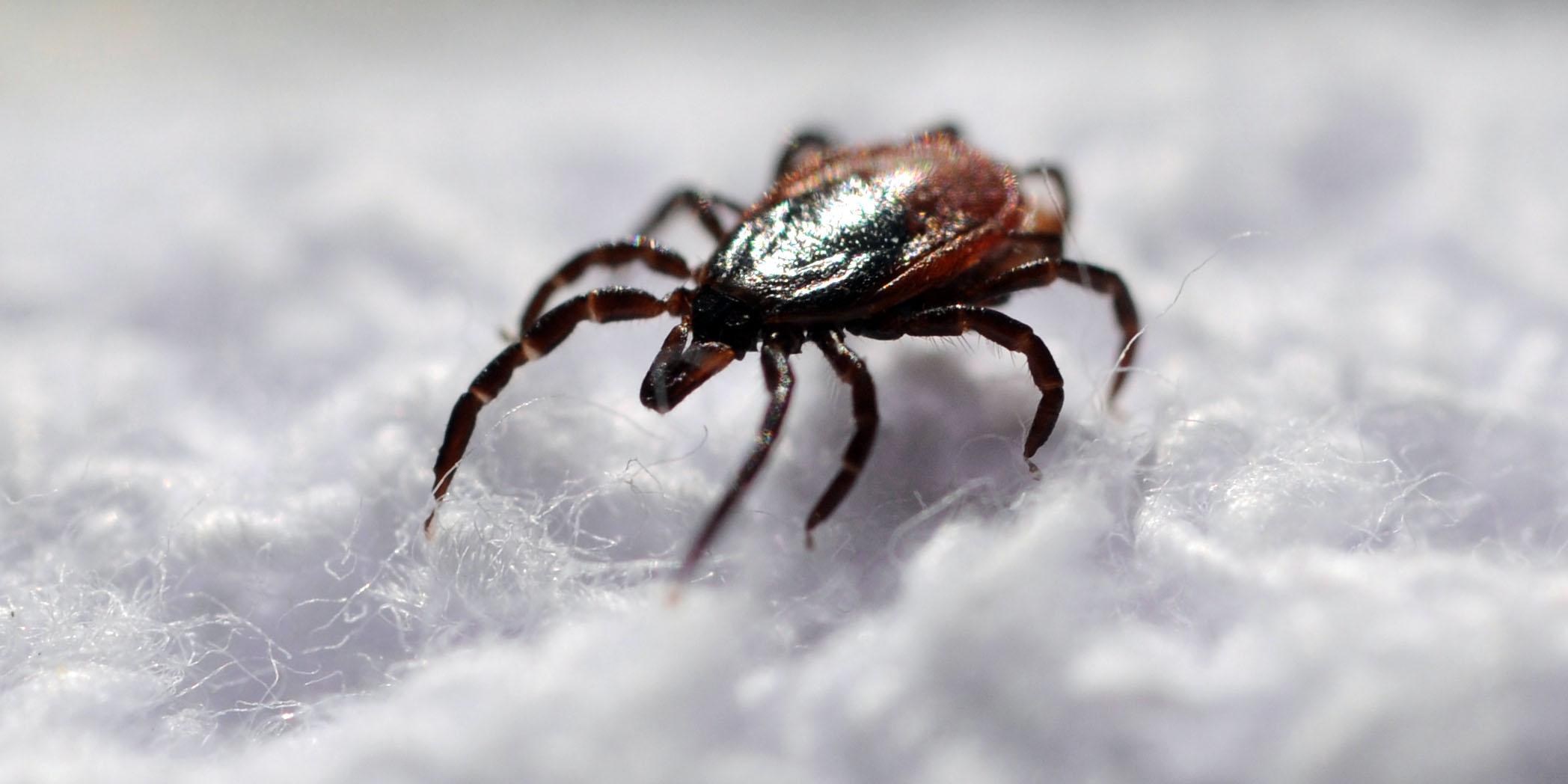 a csípés paraziták rosszindulatúak