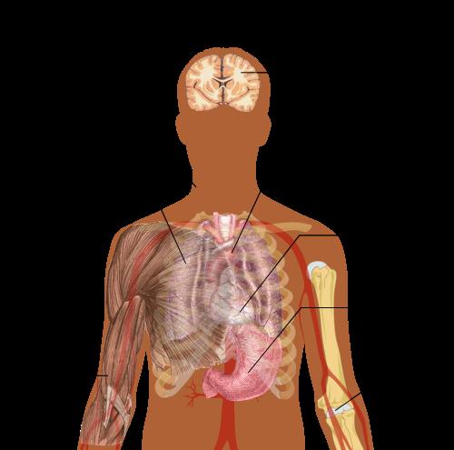 paraziták az emberi tüdő kezelésében a férgek szoptatásának kezelése