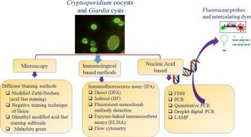 giardia antigen vizsgalat