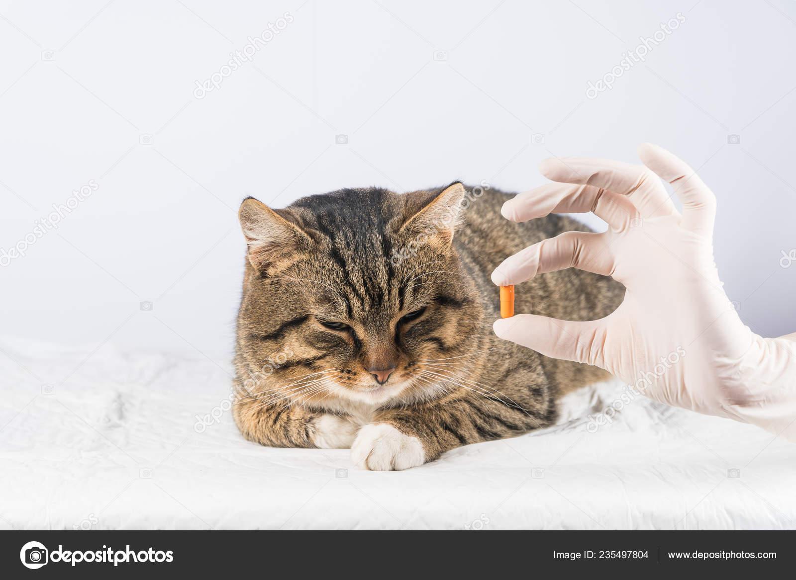 Állatgyógyszer Alben C - Tenyésztés