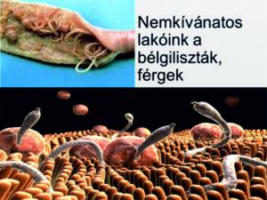 a helminták első jelei gyógyszer férgek és férgek ellen