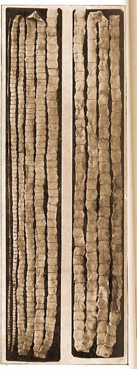 aschelminthes fajlagos tulajdonságai)