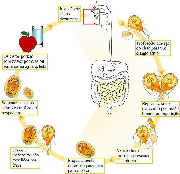 giardia sintomas portugues féregkezelési kérdés és válasz
