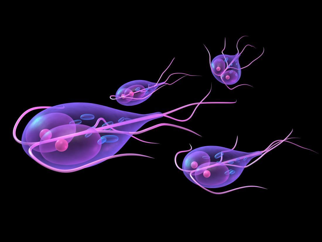 a legnépszerűbb parazita gyógyszer