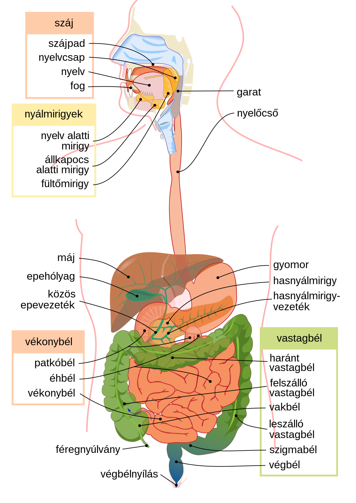 gyógyszerek emésztőrendszeri parazitákhoz
