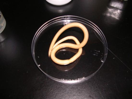parazitá a bőrben