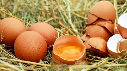 működtetett helminth tojások
