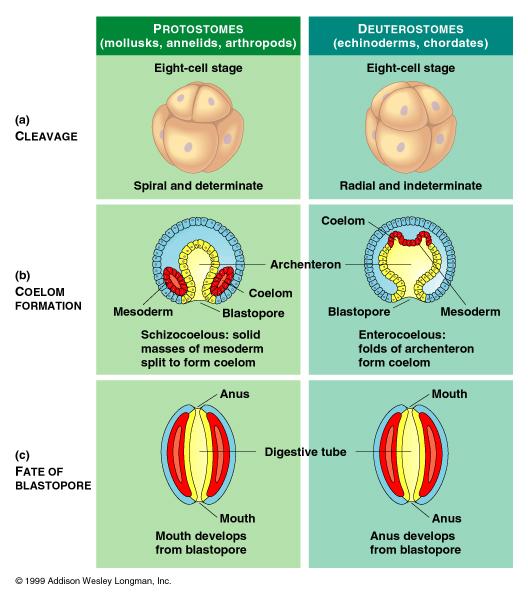 tabletták a körféreg férgek számára modern gyógyszerek a paraziták kezelésére